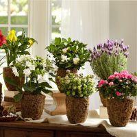 домашние цветы в горшках неприхотливые