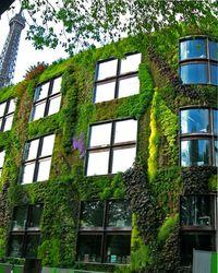 цветы для вертикального озеленения
