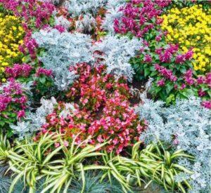 почвопокрывные растения для сада