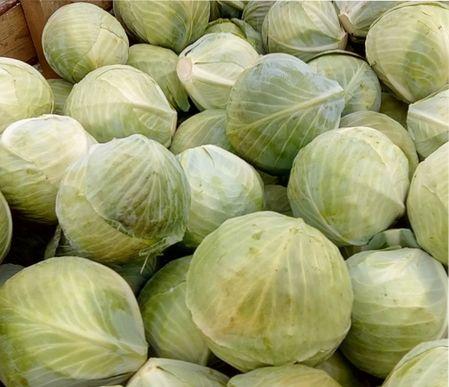 лучшие сорта капусты для хранения