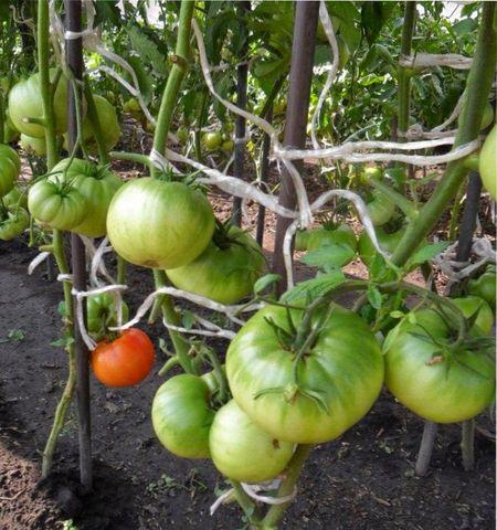 удалить листья томата