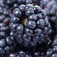 черная ягода, похожая на ежевику