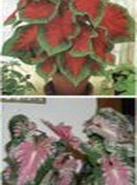растения с необычной листвой