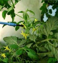 опыление огурцов в теплице