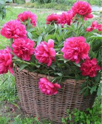 советы садоводам, огородникам