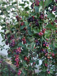 посадка плодово-ягодных культур
