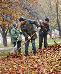 как использовать опавшие листья осенью