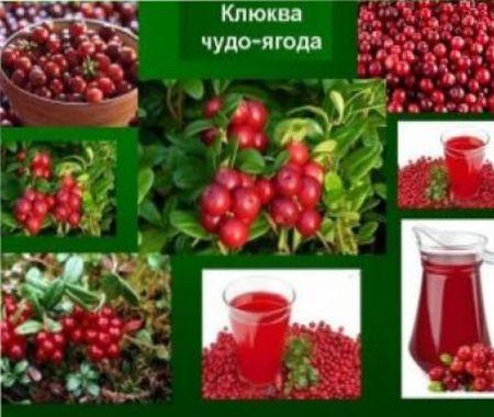 Польза ягоды клюквы