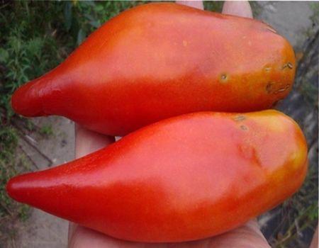 Описание и характеристика томата перцевидного