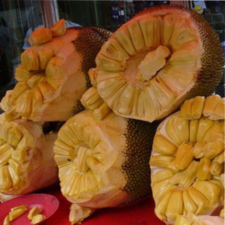 Индийское хлебное дерево