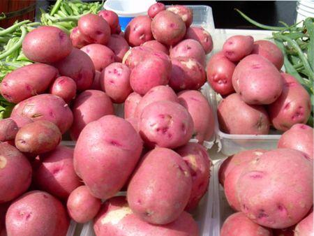 лучшие сорта красного картофеля