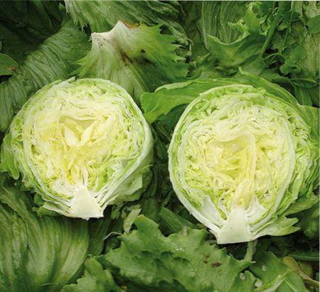 Как вырастить салат Айсберг;