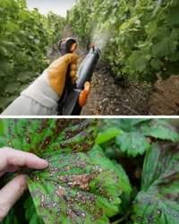 весенняя обработка от вредителей сада и огорода