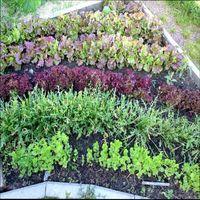 растения для второго урожая