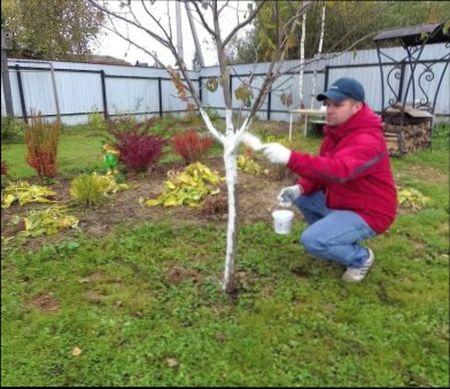 уУход за яблоней осенью на зиму