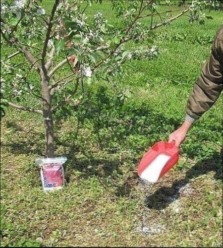 Уход за яблоней осенью на зиму