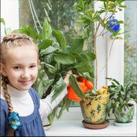 лучшие растения для детской комнаты; какие растения подойдут для детской комнаты