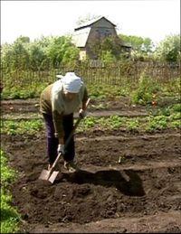 зачем копать землю осенью