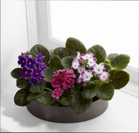 лучшие растения для детской комнаты