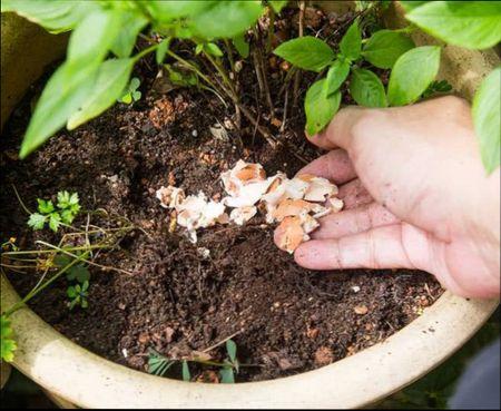 подкормка растений народными средствами