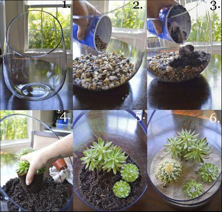 как сделать флорариум с суккулентами своими руками