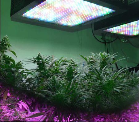 Какие лампы лучше для выращивания растений