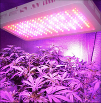 какие светодиодные лампы для растений лучше
