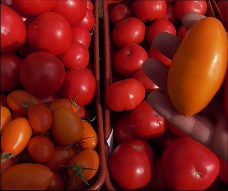 какие сорта томатов лучше
