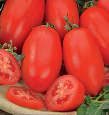 Какие сорта томатов выбрать