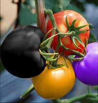 мошенники на рынке семян