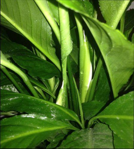 как стимулировать цветение у растений