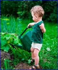 Как поливать кабачки в открытом грунте