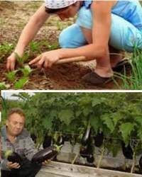 10 полезных советов дачникам и садоводам