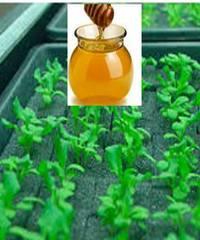 Раствор витаминов для повышения всхожести семян