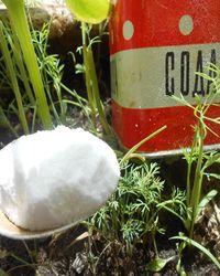 Сода от болезней и вредителей огурцов и кабачков